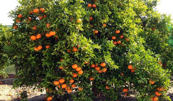 Naranjas Online 9